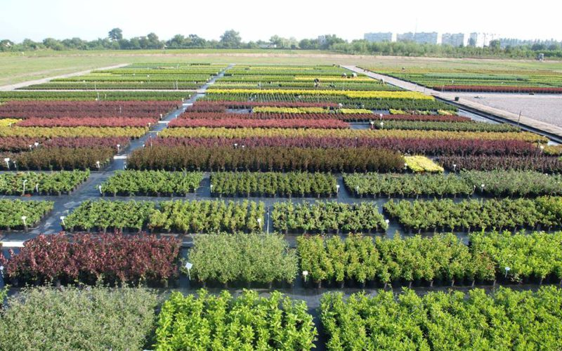 10 years of Zelena Kraina nursery