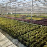 АУРІ обращается к комитету ВРУ относительно пересмотра норм налогового кодекса Украины для производителей декоративных растений