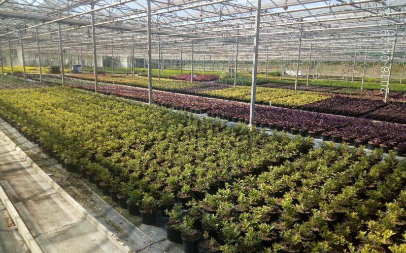 АУРІ звертається до комітету ВРУ щодо перегляду норми податкового кодексу України відносно виробників декоративних рослин
